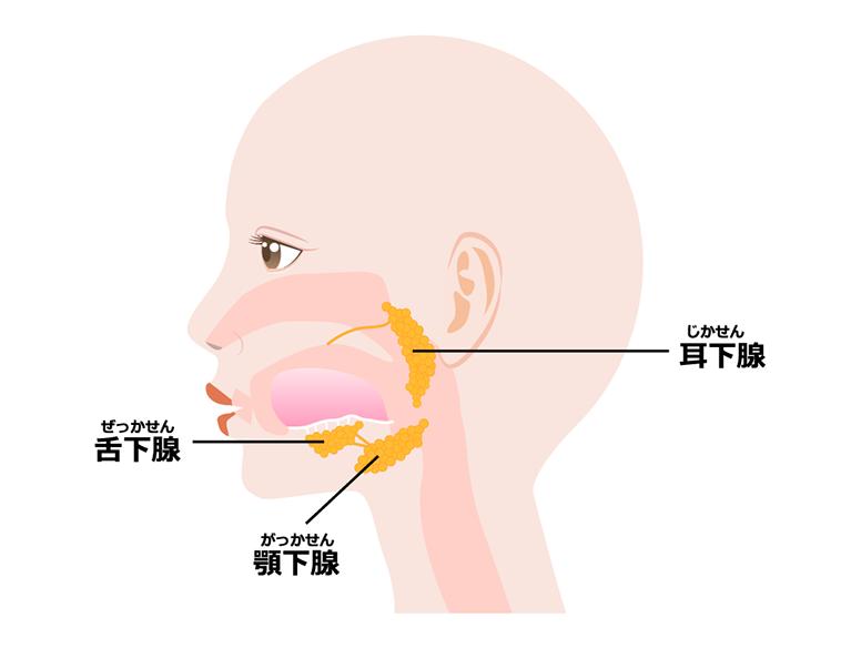 唾液腺疾患の種類